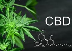 CBD Oil is The Concentrate Form that Gives Faster Results
